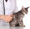 Ветеринарные клиники в Строителях
